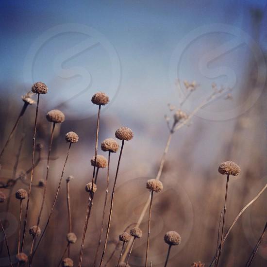 brown flower  photo
