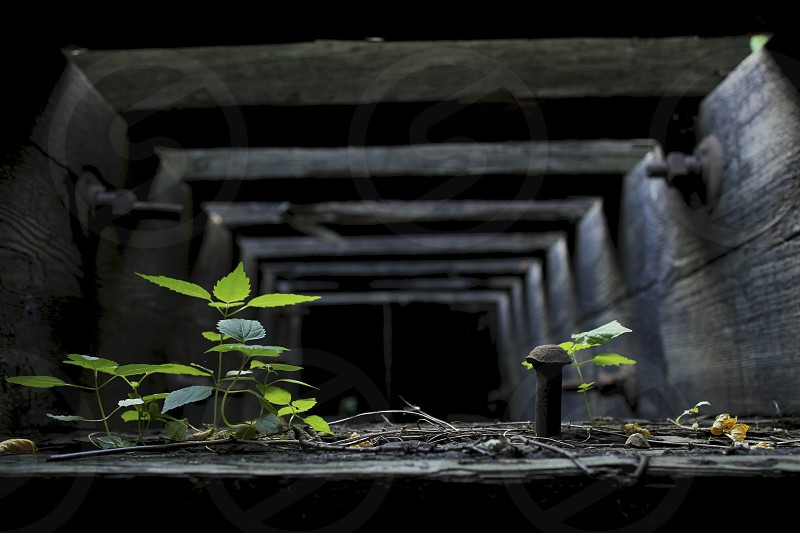 Weeds growing underneath an old train track during the summer. photo