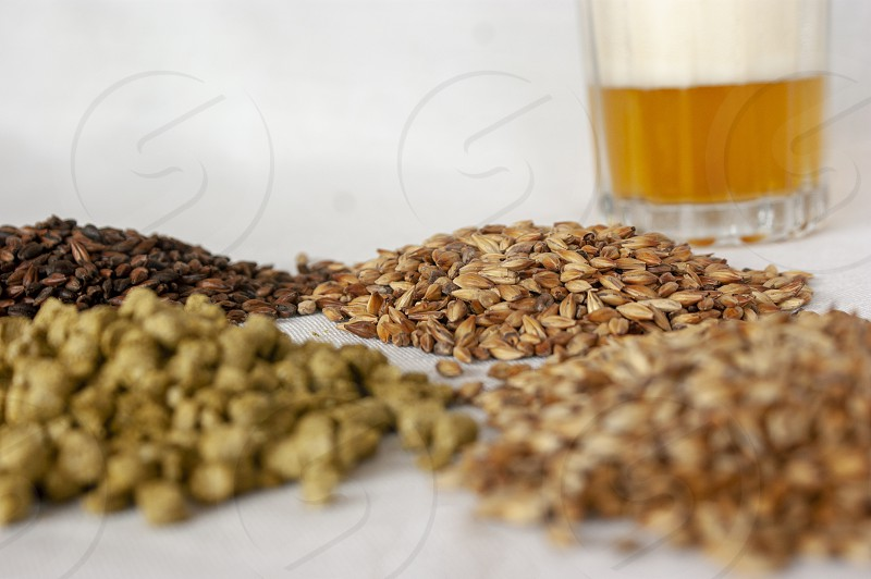an amber lager pale ale beer and its component over a withe background photo
