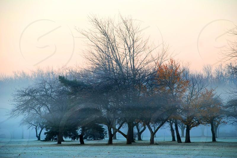 Wheatfield NY morning fog 2013 photo