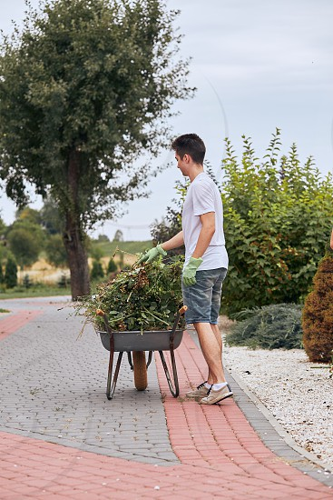 Teenage boy working at a home garden throwing a trimmed plants to wheelbarrow. Candid people real moments authentic situations photo