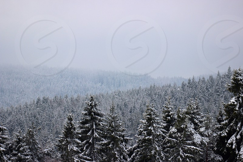 winter view and grey sky photo