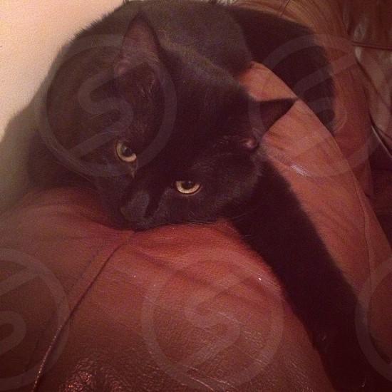 Ziggy kitten cat bored hating life sleepy  photo