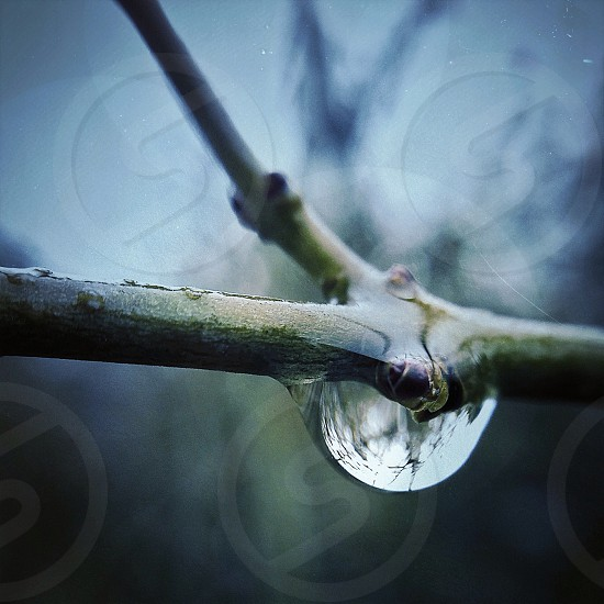green tree branch with water droplet photo
