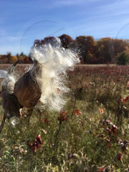 Fall seed  photo