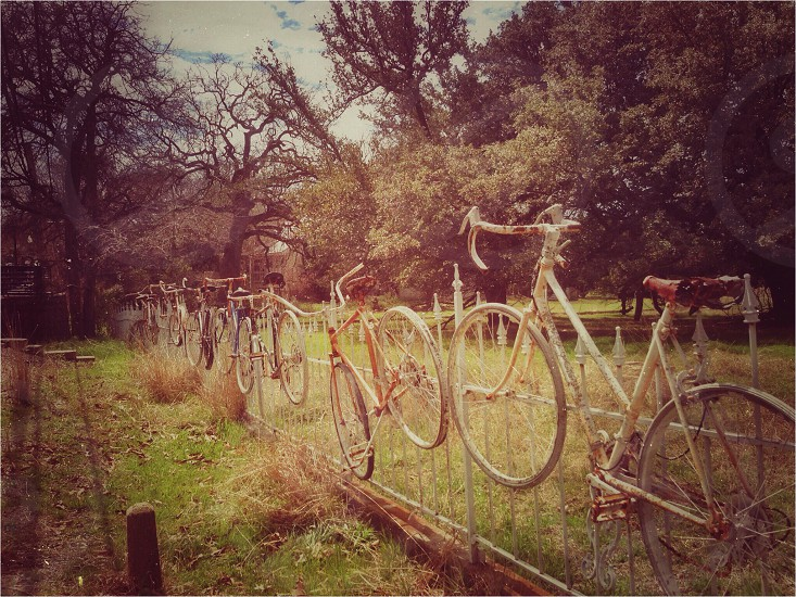 Bikes hanging on a fence.  photo