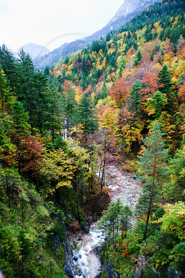 autumn leaves in the forest and the river photo