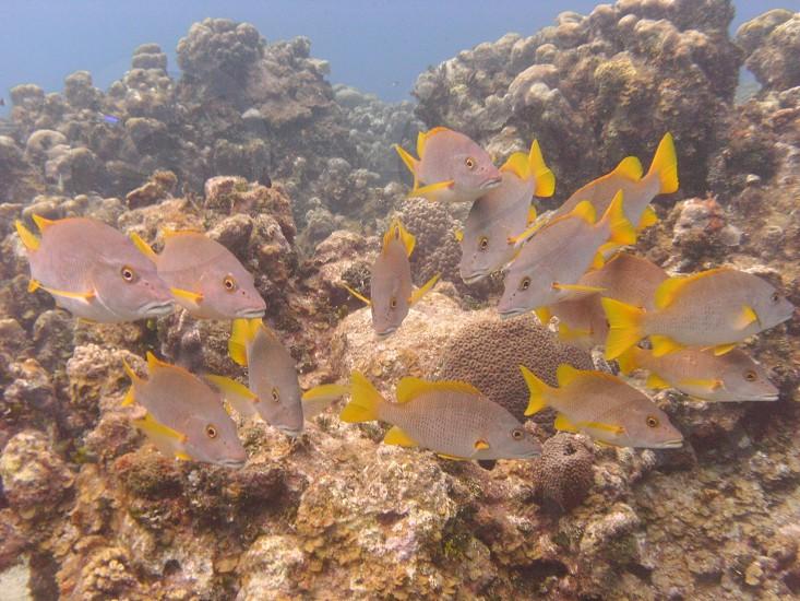 gray and yellow fish photo
