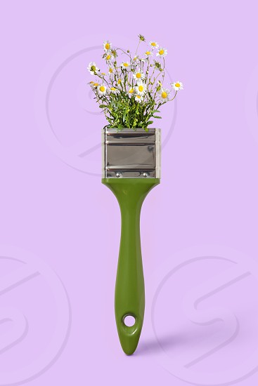 Delicate fild flowers chamomile on a green paint brush on a violet background place for space. Non toxic concept painting. photo
