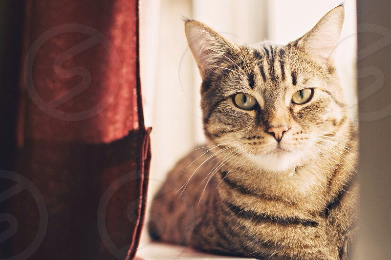 gray and brown tabby cat photo