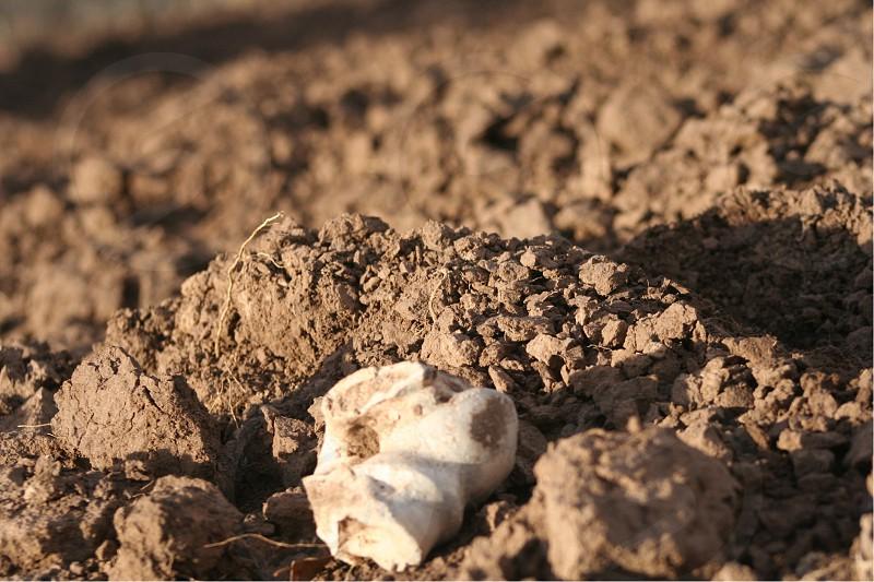 Back bone dirt mud bone horse bone photo