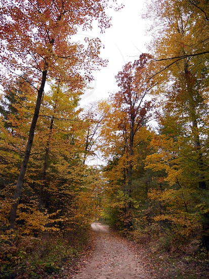 Fall path in the woods photo
