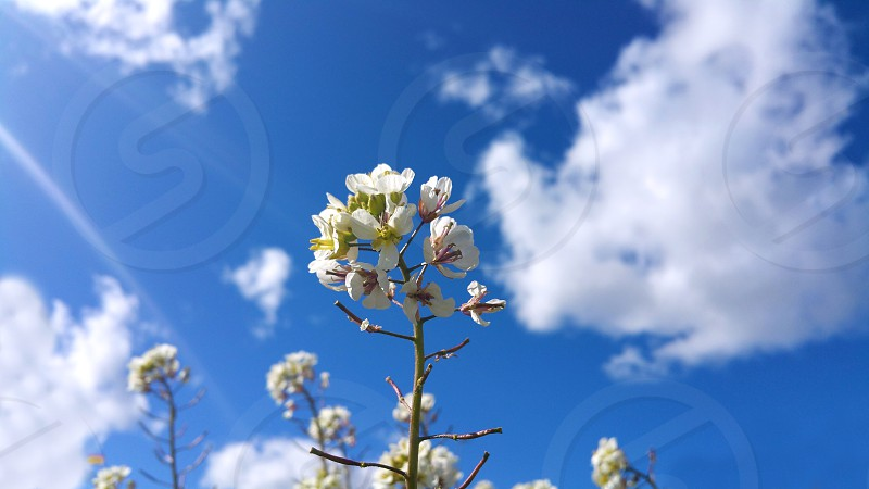 flowers blossoming on blue sky background photo