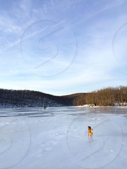 Dog on ice winter froxen lake photo