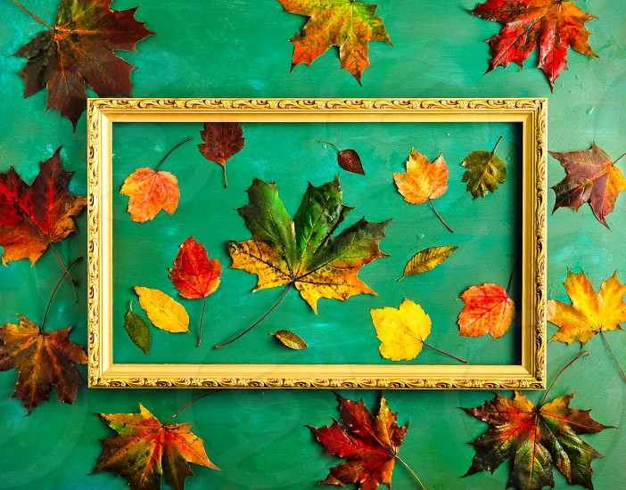Autumnal composition with variety of fallen leaves in picture frame on bright green background. Top view horizontal orientation photo