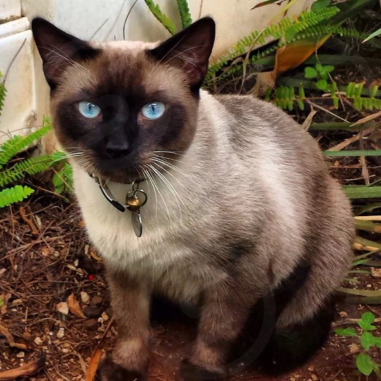 Kitty in the yard.  photo