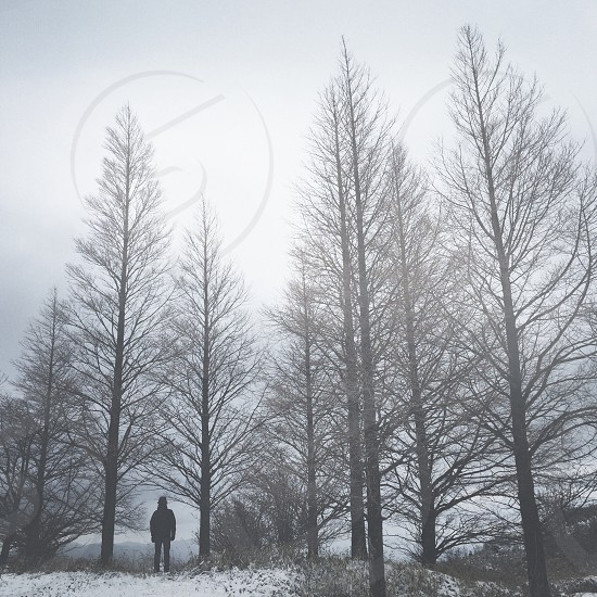 man standing amid tale pine trees on snowy ground photo