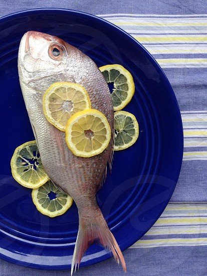 st peter fish with yellow slice lemon photo