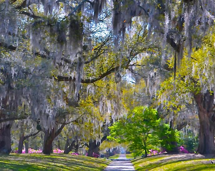 Coastal South Carolina photo