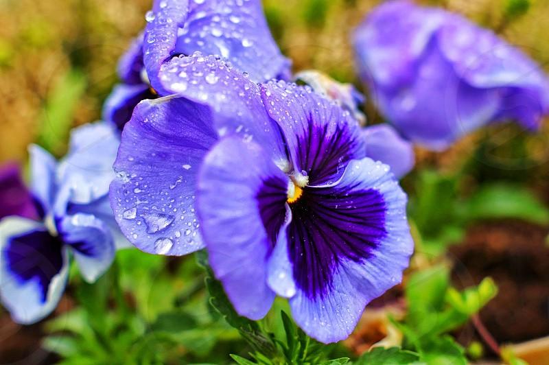 purple petal flower photo
