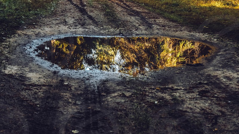 Autumn forest reflection in  a puddle photo