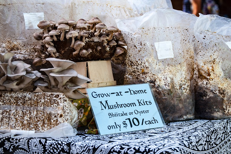 Mushrooms food organic farmers market grow photo