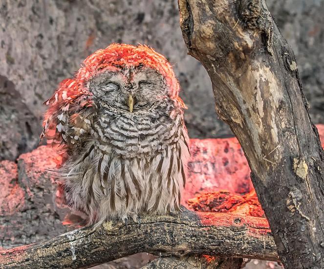 warm owl photo