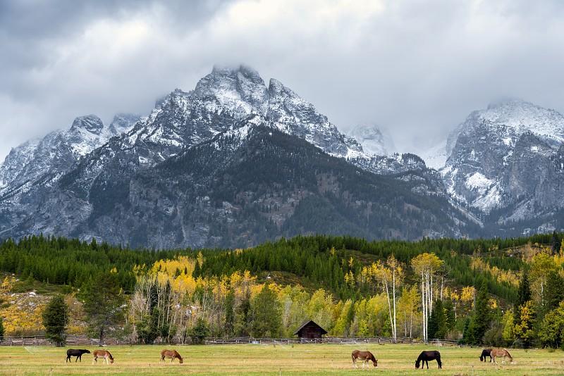 Donkeys in a field in Grand Teton National Park photo