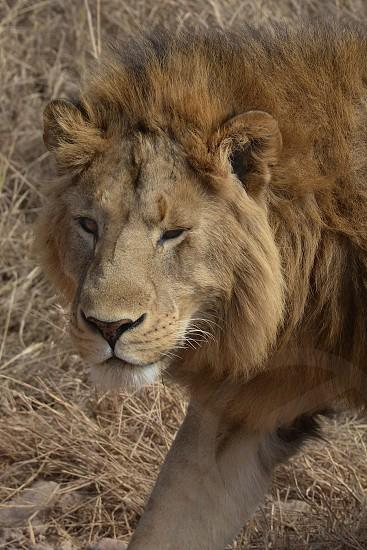 Hungry King - Tanzania photo
