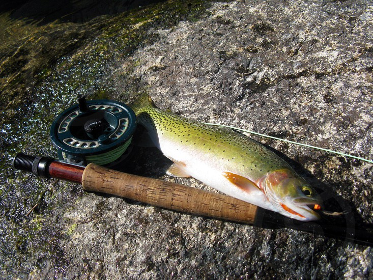 fly fishing trout fishing rod and reel mountain stream fishing photo
