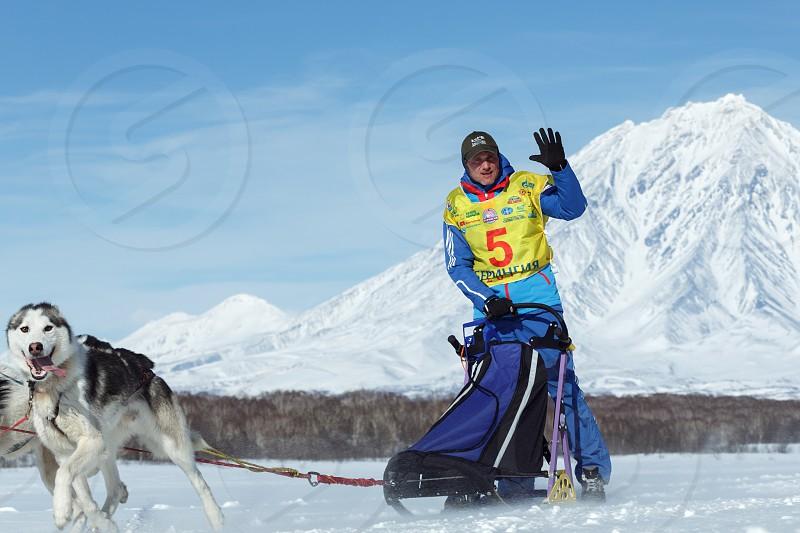 PETROPAVLOVSK KAMCHATKA PENINSULA RUSSIA - FEB 25 2017: Running sled dog team Kamchatka musher Denis Ryabuhin. Russian Cup of Sled Dog Racing (snow disciplines) Kamchatka Sled Dog Racing Beringia photo