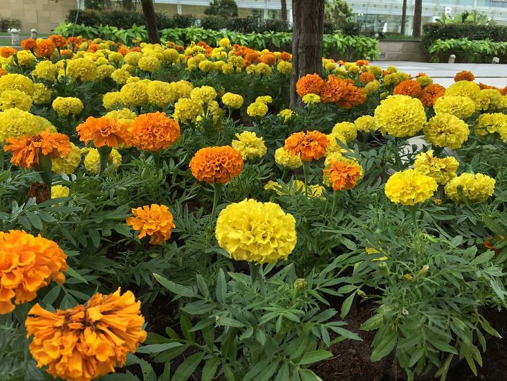 flowersnaturegarden photo
