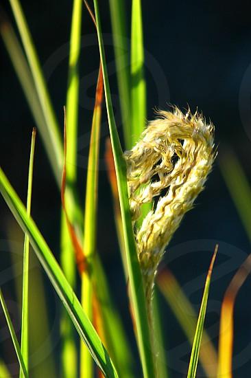 Soft grass plant photo