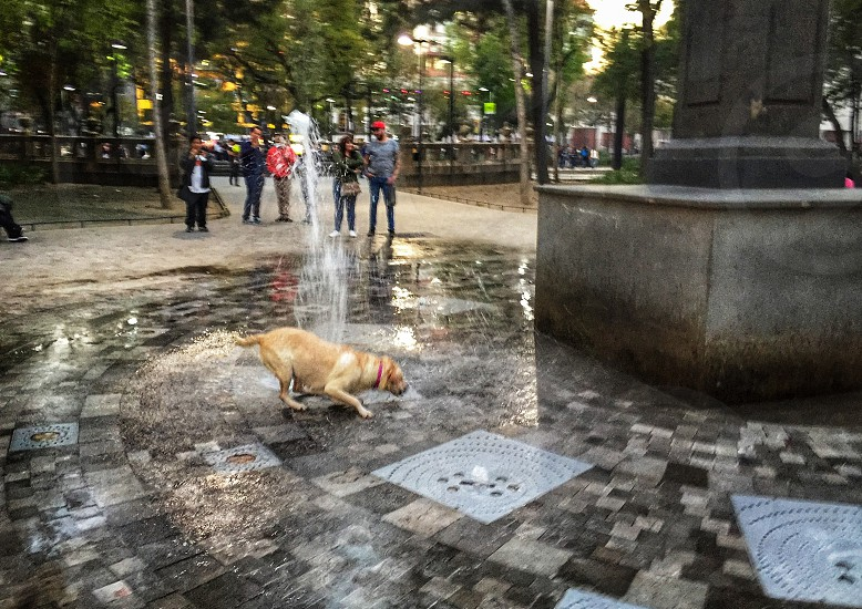 dog; pets; fun;fountain; playing; wet; happy; happiness  photo