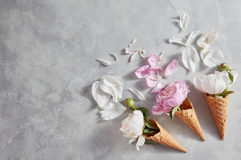 Delicate pink white peony flowers in a wafer cones with petals on a gray stone background copy space. Top view. Concept of congratulations for Valentines Day. photo