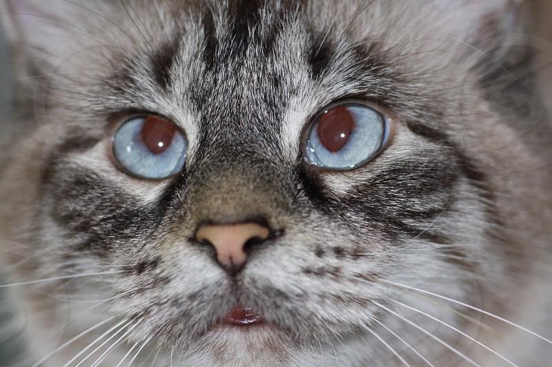 Cross eyed baby cat photo