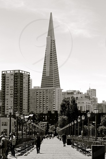 Transamerica Pyramid in San Francisco as seen from Pier 7. photo