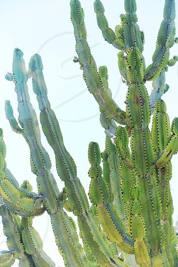 Cactus green nature plants photo