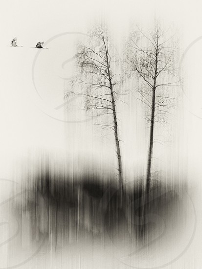 'Today is tomorrow' concept; time is passing by; fine art vision of birds and trees isolated.  photo