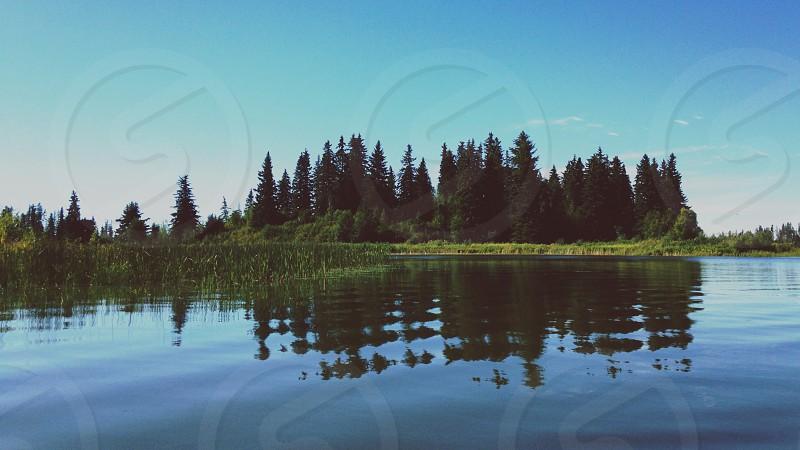 green pine tree on island photo