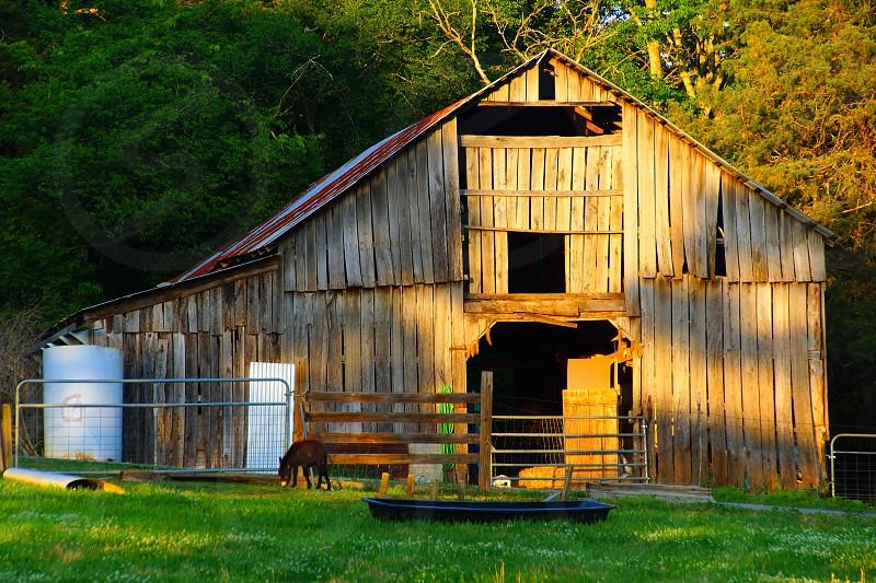 brown horse near brown barn photo