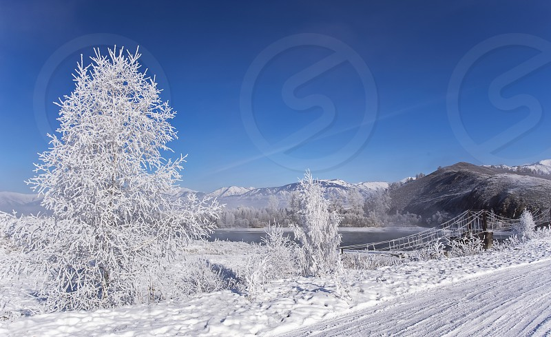 foggy winter landscape frosty morning over the river and trees in hoarfrost on the shores Russia Siberia Altai photo