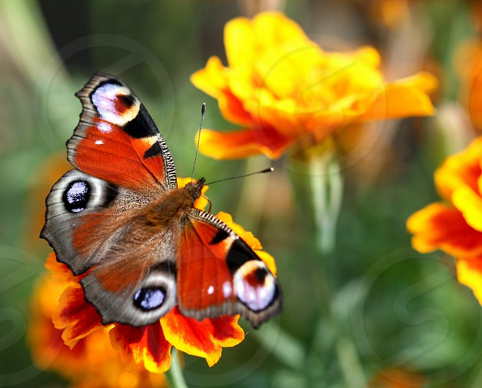 color butterfly sitting on flower photo