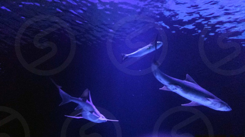 Creatures of the wild. Sharks. Antalya Turkey photo