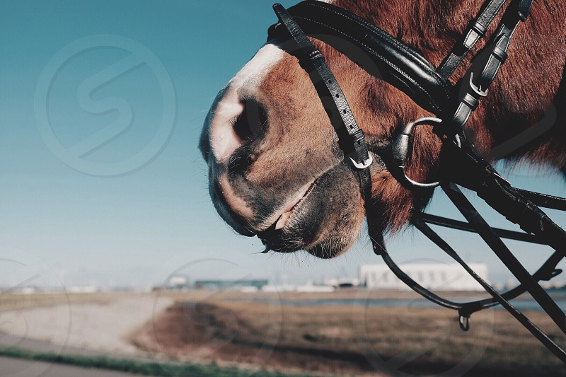 tilt shift photography of brown horse with black leather harness during daytime photo
