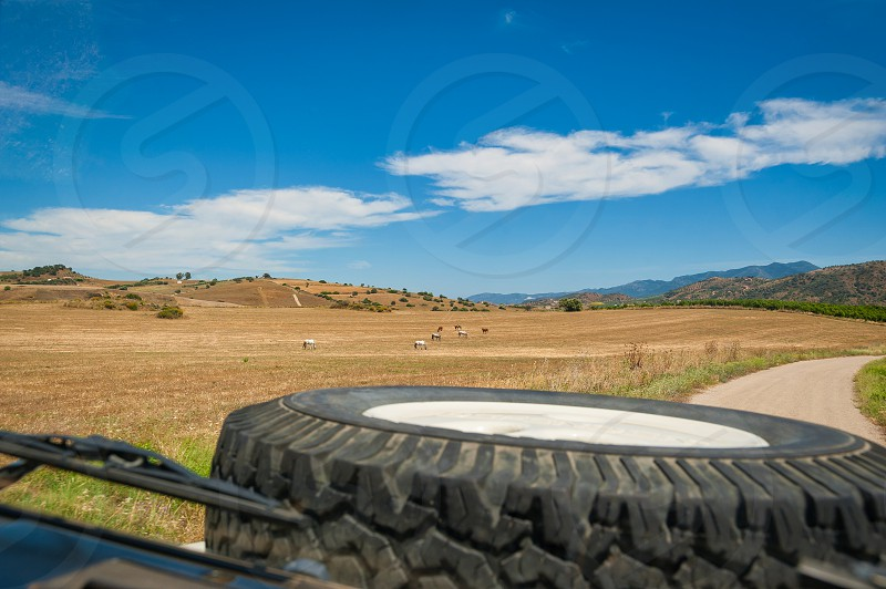 View at horses grazing in a field from driver seat in 4x4 vehicle while driving through countryside. Andalucia Andalusia Spain. Europe. photo