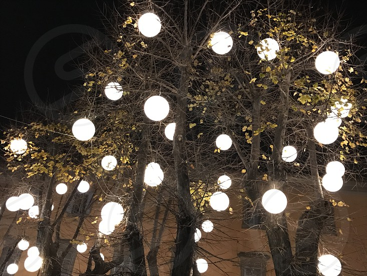 Lights tree photo