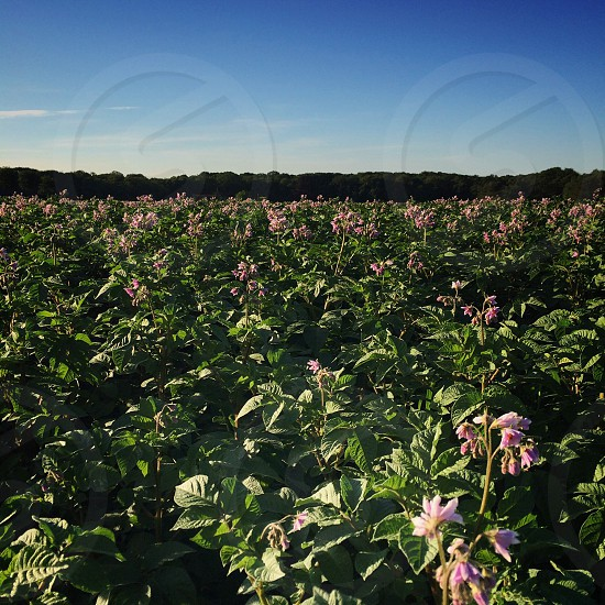 white and pink flower plantation photo