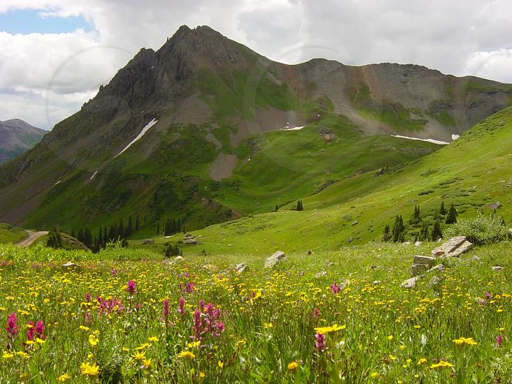 Yankee Boy Basin near Ouray Colorado photo