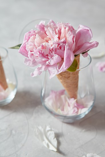 Blooming pink pions with green leaf in wafer cones in glass petals on a gray background place for text. Concept of congratulations for Valentine's Day photo